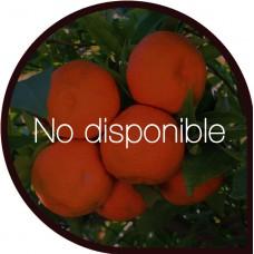 Naranjas de Mesa 5 Kg + Clementinas 5 Kg