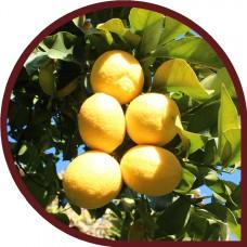 Limones 15 Kg