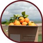 Naranjas de Mesa 10 kg + 500 ml Aceite Oliva Virgen Extra