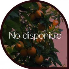Naranjas de Mesa 10 Kg + 10 Kg