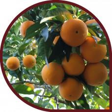 Naranjas de Zumo 10 Kg