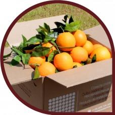 Naranjas de Mesa 10 Kg + Naranjas de Zumo 10 Kg