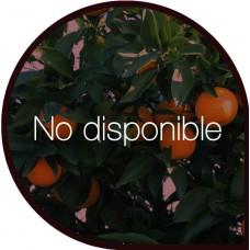 Naranjas de Zumo 10 Kg + Clementinas 5 Kg