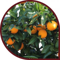 Naranjas de Zumo 15 Kg